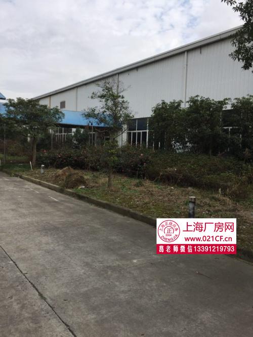 G1406 金山工业区单层厂房 高速出口 600平起租 单层带喷啉 厂房仓库出租