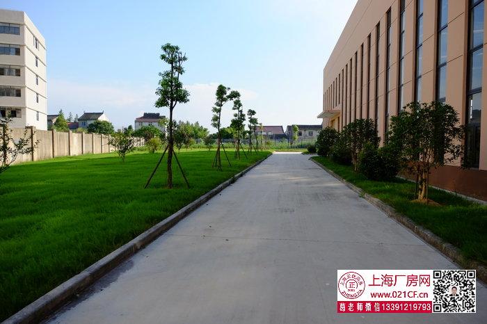 G1673 金山张堰工业园区单层多层厂房仓库出租  可分割出租